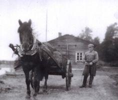 Finnhorse - Finnish horse