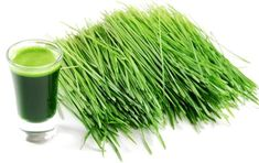 The health benefits of barley grass are amazing. The food contains extremely potent cancer-killing enzymes and health-boosting nutrients. Smoothie Packs, Smoothie Recipes, Barley Health Benefits, Wheatgrass Powder, Danette May, Barley Grass, Wheat Grass, Lemon Essential Oils, Home