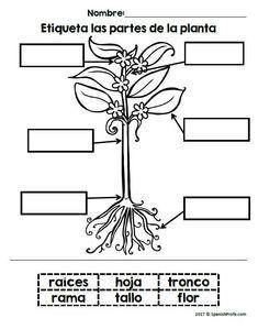 Plants unit in Spanish with many Science, Writing and Language Arts activities for Kindergarten, 1st and 2nd grade. Interdisciplinary unit. Unidad de las plantas. Hojas de ciencias y escritura.