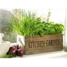 Kitchen Herb Garden Ideas (12 Pics) | Vitamin-Ha