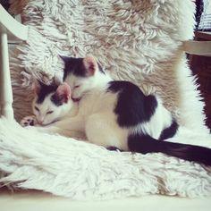 kittens black/white #bw#kittens