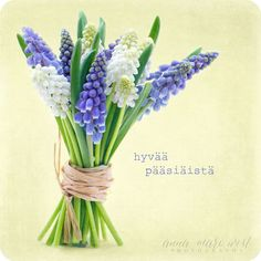 Kevätkortti; Helmililjakimppu | Anna-Mari West Photography Blue Spring Flowers, Spring Flower Bouquet, Anna, Cut Flowers, Vegetable Garden, Glass Vase, Photography, Home Decor, Image