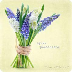 Kevätkortti; Helmililjakimppu   Anna-Mari West Photography