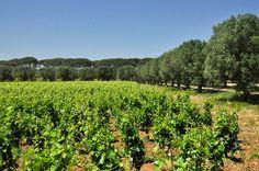 wines of Puglia