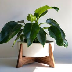 The Feels ➧ Potted Earth® Patera Bowl Planter & Walnut Apollo Stand + Philodendron Congo Green. Complete set available in-store or shop planters online — tap to shop! Cactus House Plants, House Plants Decor, Plant Decor, Balcony Garden, Succulents Garden, Cactus Decor, Cactus Art, Modern Plant Stand, Diy Plant Stand