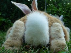 That tail, those feet! Big Bunny, Baby Bunnies, Cute Bunny, Lop Bunnies, Fluffy Bunny, Funny Bunnies, Bunny Pics, Bunny And Bear, Pet Rabbit