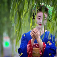 Oiran & Geisha | The maiko Mameryu in the willows. (Taken by...
