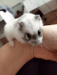 Tiny Bandit http://ift.tt/2DR6MUF