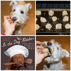 Tuna Tater Tots: Easy 2 Ingredient Dog Treat recipe from In the Dog Kitchen by Julie Van Rosendaal!