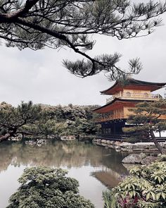 Kinkaku-ji ✨⛩ #Japan #kyoto  Manhã delicia explorando Kyoto! #LVCruise