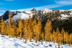 Cutthroat Pass Golden Larch Relax, Hiking, Mountains, Nature, Photography, Travel, Outdoor, Walks, Voyage