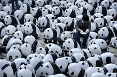 Anhui, China A man sits among 1600 panda sculptures in Hefei. The sculptures represent the total number of live pandas left in the world today Photograph: ChinaFotoPress via Getty Images