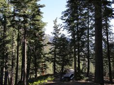 Silver Creek Campground, south of Markleeville California. #camping