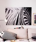 Ikea Pjatteryd Zebra Canvas