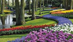 At this time every year I remember when my mother and I were in Holland and made an unexpected stop at Keukenhof. Absolutely the most beautiful gardens I have ever seen. They plant over 7 million flower bulbs throughout what feels like an enchanted forest. Gorgeous.