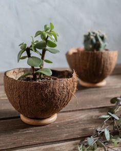 Diy Crafts Hacks, Diy Home Crafts, Diy Home Decor, House Plants Decor, Plant Decor, Coconut Shell Crafts, Deco Nature, Diy Planters, Garden Projects