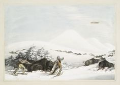Buffalo hunt. On snow shoes. From New York Public Library Digital Collections.