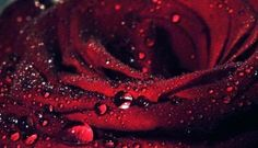 Water drops on red rose wallpaper, Water drops on red rose Flower HD desktop wallpaper Dinner Recipes For Kids, Healthy Dinner Recipes, Kids Meals, Red Rose Petals, Purple Roses, Fotografia Macro, Easy Chicken Curry, Homemade Black, Healthy Food Delivery