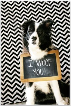 5 Fun & Easy Home Pet Photography Ideas | Pretty Fluffy 2