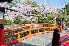Red bridge and cherry blossoms at Mibu-dera, Kyoto