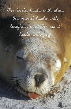 1000 images about inspiring quotes on pinterest animal