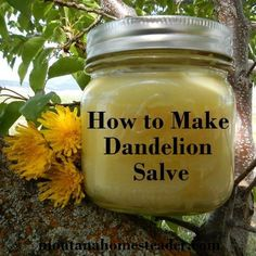How to Make Dandelion Salve. Works great for dry skin, aches and pains!  Montana Homesteader #DIY::