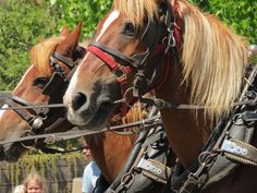 Can't have a parade without horses.