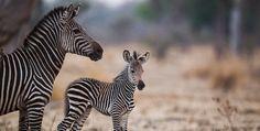 Animals, National Forest, Africa, Guys, Animales, Animaux, Animal, Animais