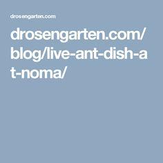 drosengarten.com/blog/live-ant-dish-at-noma/ Blog Live, Live Happy, Ants, Dishes, Logo, Healthy, Logos, Ant, Tablewares