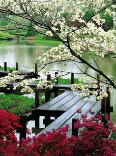A beautiful lake with blooming trees and a nice deck to walk on. Excellent idea for a larger landscape/garden. Beautiful World, Beautiful Gardens, Beautiful Flowers, Beautiful Places, Beautiful Pictures, Flowers Nature, Beautiful Live, Spring Flowers, Blooming Trees