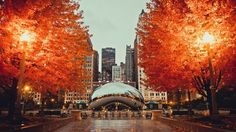 Chicago in the Fall. Photo by my friend, John Mcpherson.
