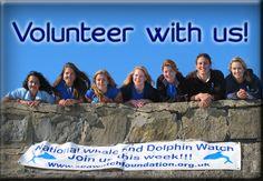 Sea Watch Foundation needs you!!