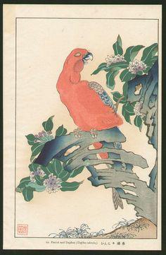 NAKAYAMA SUGAKUDO - Japanese Woodblock Print