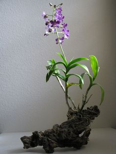 orchid piece wood - Google претрага