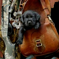 "Ok, maybe real dogs DO ride in purses - but only when they're babies!! Plus, this is a GUY'S ""purse""!  ha :)"