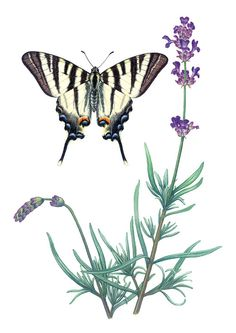 Scientific Illustrations by Birgitte Rubaek, via Behance