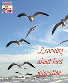 We had a lot of fun with this bird migration activity, it gave the kids a great insight into how hard birds have to work during their migration season, and how tiring it must be. Primary Science, Science Activities For Kids, Preschool Themes, Science Lessons, Teaching Science, Winter Activities, Science Projects, Science Experiments, Paddle To The Sea