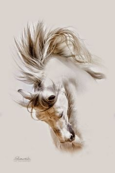 : The Life Art - Comunitate Horse Drawings, Animal Drawings, Art Drawings, Painted Horses, Pretty Horses, Beautiful Horses, Horse Pictures, Art Pictures, Horse Artwork