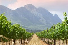 South Africa: Exploring Wines of the Rainbow Nation Cape Town Accommodation, South African Wine, Wine Safari, Wine Vineyards, Drinking Around The World, Woodland Park, Wine And Spirits, Countries Of The World, Wine Country