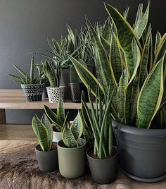 80 DIY Plant Stand Ideas To Fill Your Room With Greenery These trendy HomeDecor ideas would gain you amazing compliments. Check out our gallery for more ideas these are trendy this year.