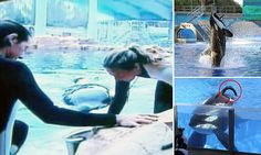 Seconds from horror, a tormented whale and the trainer he killed: As the bull orca blamed for THREE human fatalities dies in captivity, why his story is proof that these glorious mammals must be left to swim free.   http://www.dailymail.co.uk/news/article-4133976/A-tormented-whale-trainer-killed-Florida.html