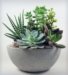 Concrete Bowl | This concrete bowl has a simple, minimalist design, light grey... | Pots & Planters