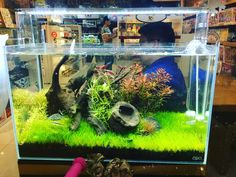 "354 Likes, 1 Comments - ADA NatureAquarium Philippines (@adaphilippines) on Instagram: ""ADA Nature Aquariums on SALE @buildcity @shangrilaplazaofficial"""