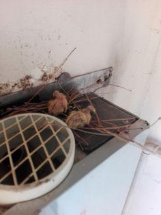 Baby pigons over my water heater. http://ift.tt/2tz2Dw2