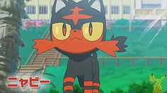 Omg I CANT WAIT FOR SUN AND MOON ANY LONGER!!! GIVE ME MY LITTEN XD