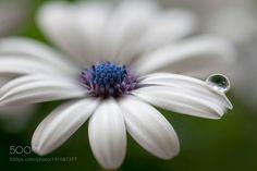 flower drop by kusoksveta