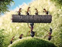 Russian photographer Andrey Pavlov uses real ants to create amazing macro pictures by spending hours playing with them and posing them to get the perfect shot for his series Ant Tales.