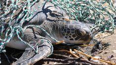 La basura y la falta de alimento fueron los principales problemas de la fauna marina durante 2017 http://infob.ae/2EqbxkM