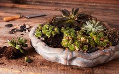 Plants, Garden, Succulents, Succulent Terrarium, Planters, Hypertufa, Garden Vines, Indoor Plants, Succulent Garden Indoor