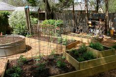 In our garden - raised beds